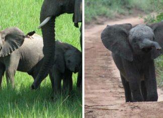 Se prohíbe la venta de elefantes para circos y zoológicos de todo el mundo