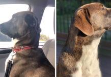 Su perro la trata con indiferencia después de llevarlo al veterinario