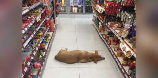 Tienda abre puertas a perro durante ola de calor