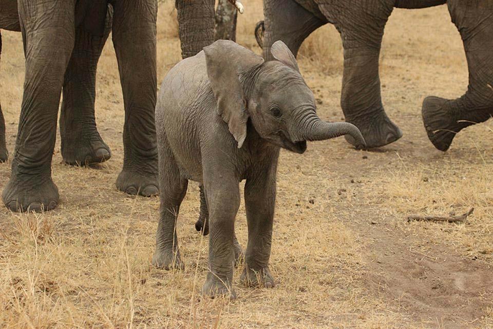 Tierno elefante