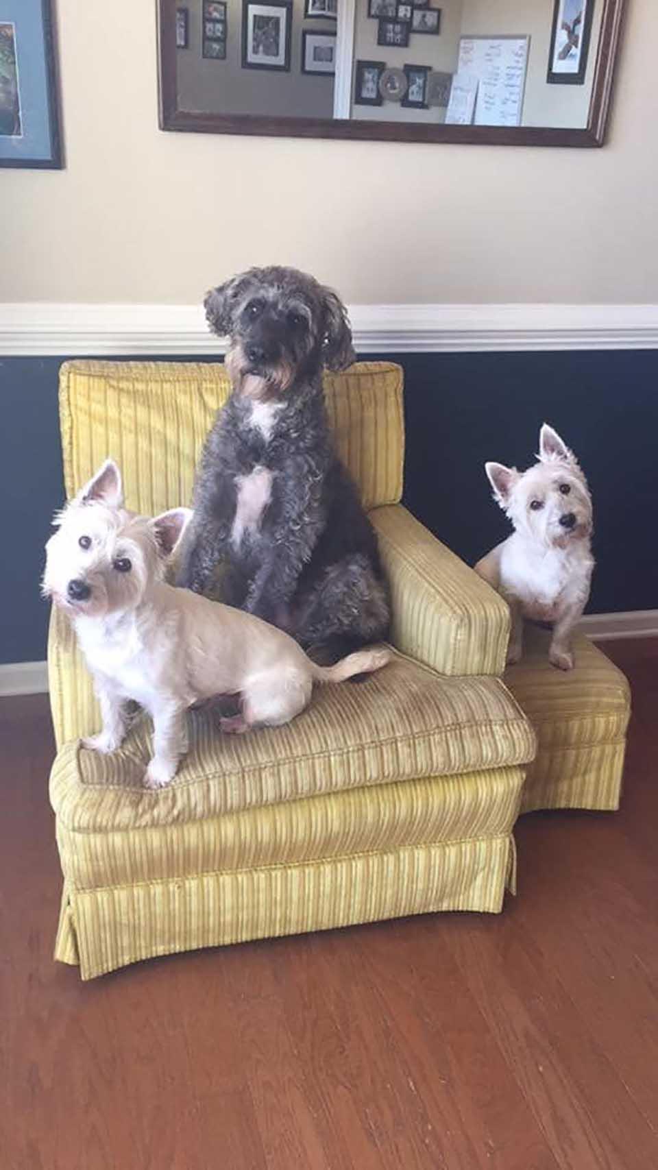 Tres perrito en el hogar