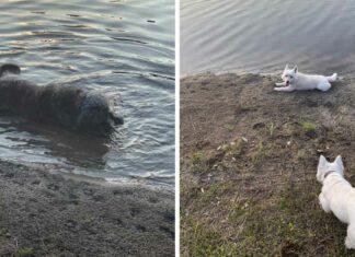 Tres perritos luego de pasear murieron de intoxicación por algas tóxicas