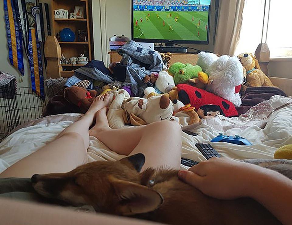 Zorra descansa en habitación