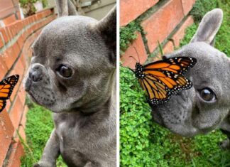 Adorable perrita se hizo amiga de una mariposa y sus fotos son increíbles