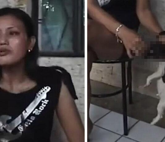 Animalistas buscan a mujer que apagaba un cigarrillo sobre un cachorro