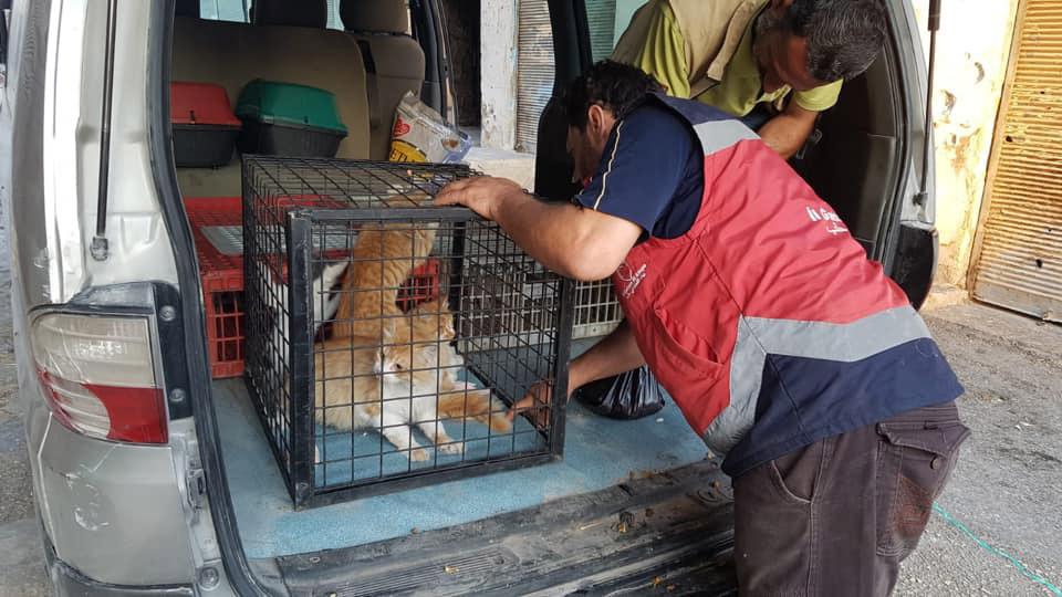 Auto con gatitos rescatados