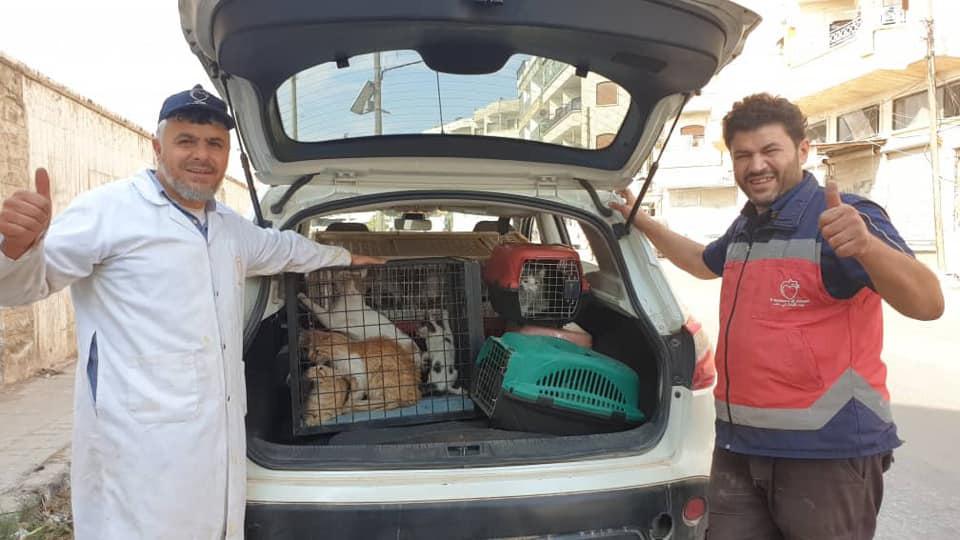 Auto para llevar gatos rescatados