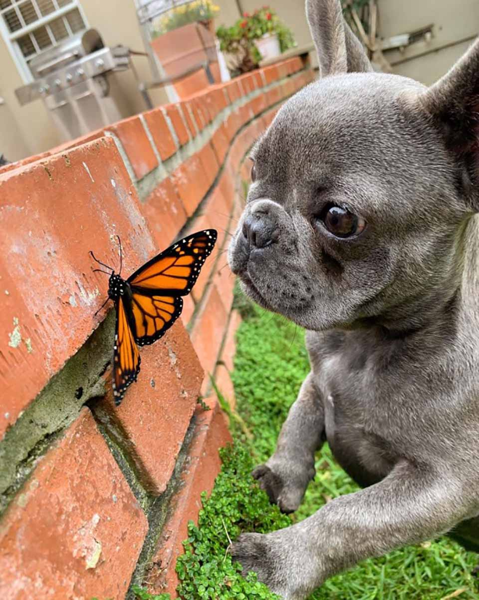 Cachorro es amigo de mariposa