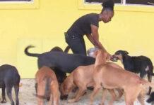 Cerca de 100 animales murieron en un refugio durante el huracán Dorian