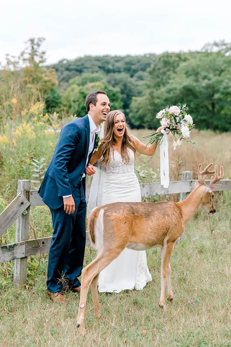 Ciervo en la boda