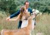 Ciervo interrumpe boda para comer el ramo