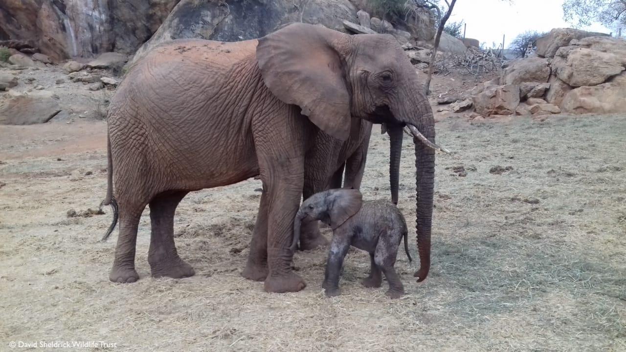Cría de elefante con su mamá