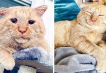 Dulce gatito es adoptado y no deja de ronronear