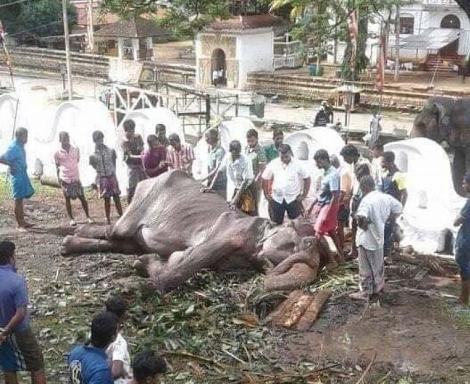 Elefanta murió
