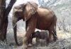 Elefante salvaje trae a su recién nacido para conocer a quienes la salvaron