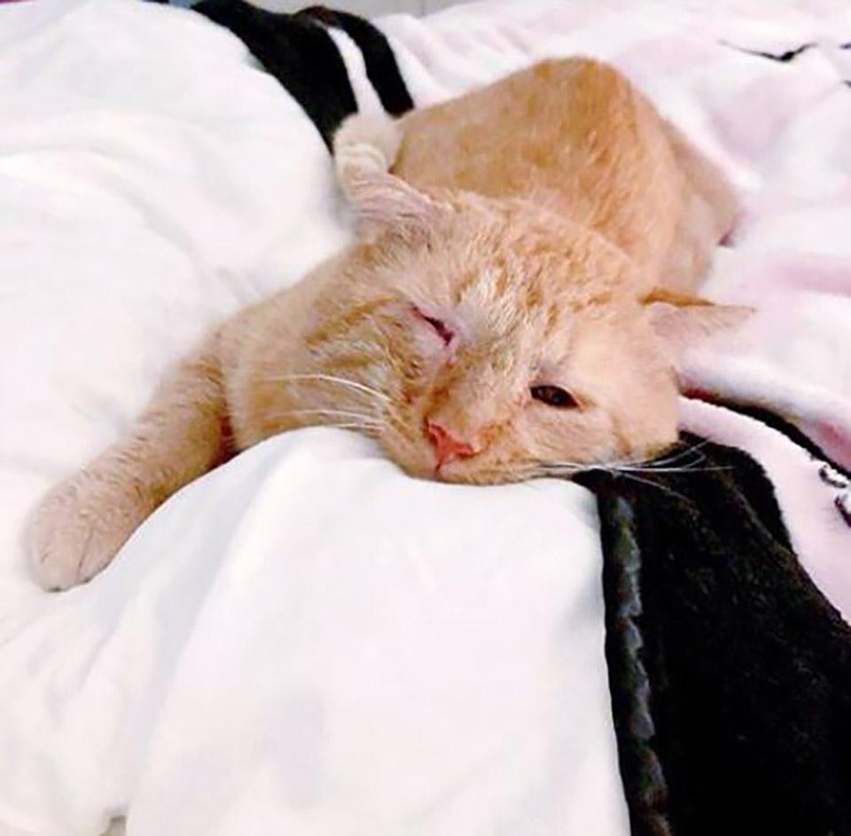 Gatito descansando