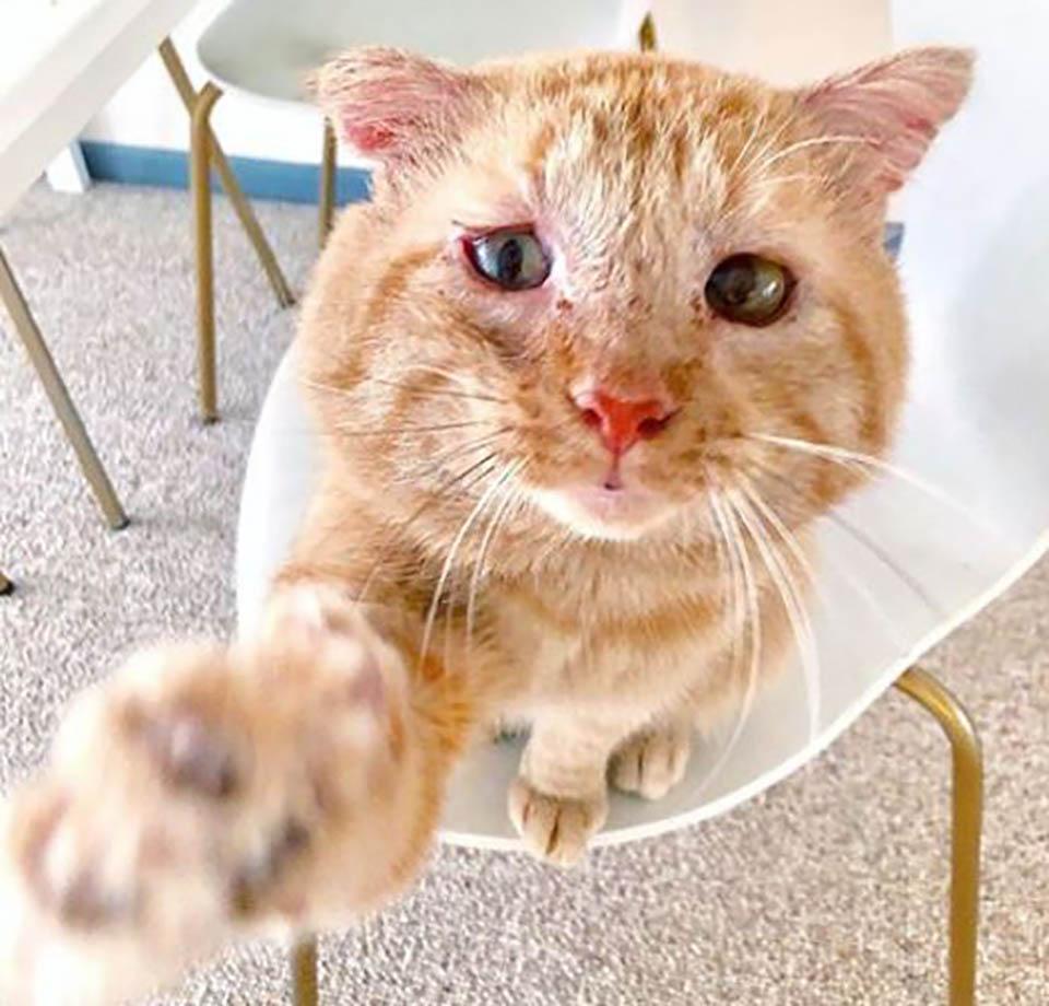 Gatito levanta su pata