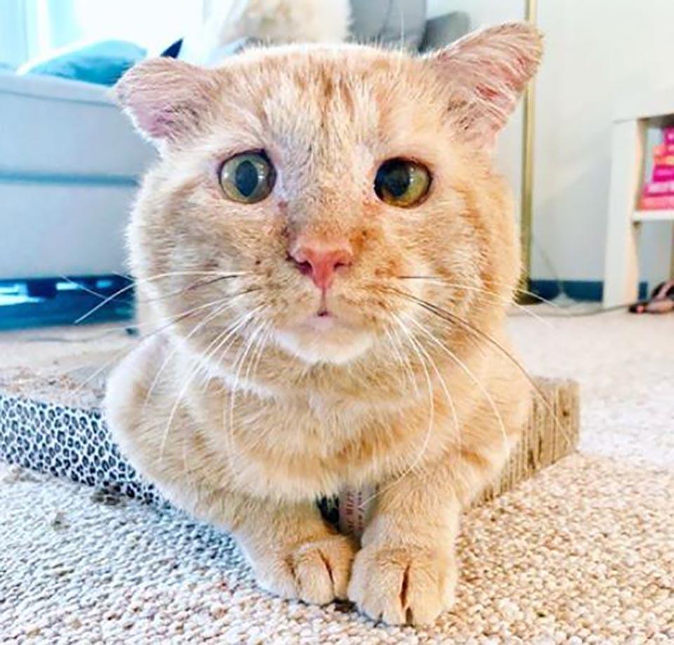 Gatito vivía en las calles pero ahora tiene un hogar