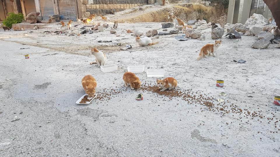 Gatitos desprotegidos reciben alimento