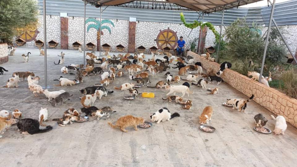 Gatitos en santuario