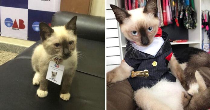 Gato contratado por bufete de abogados