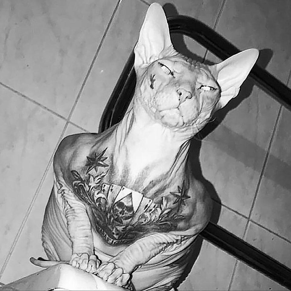 Gato tatuado