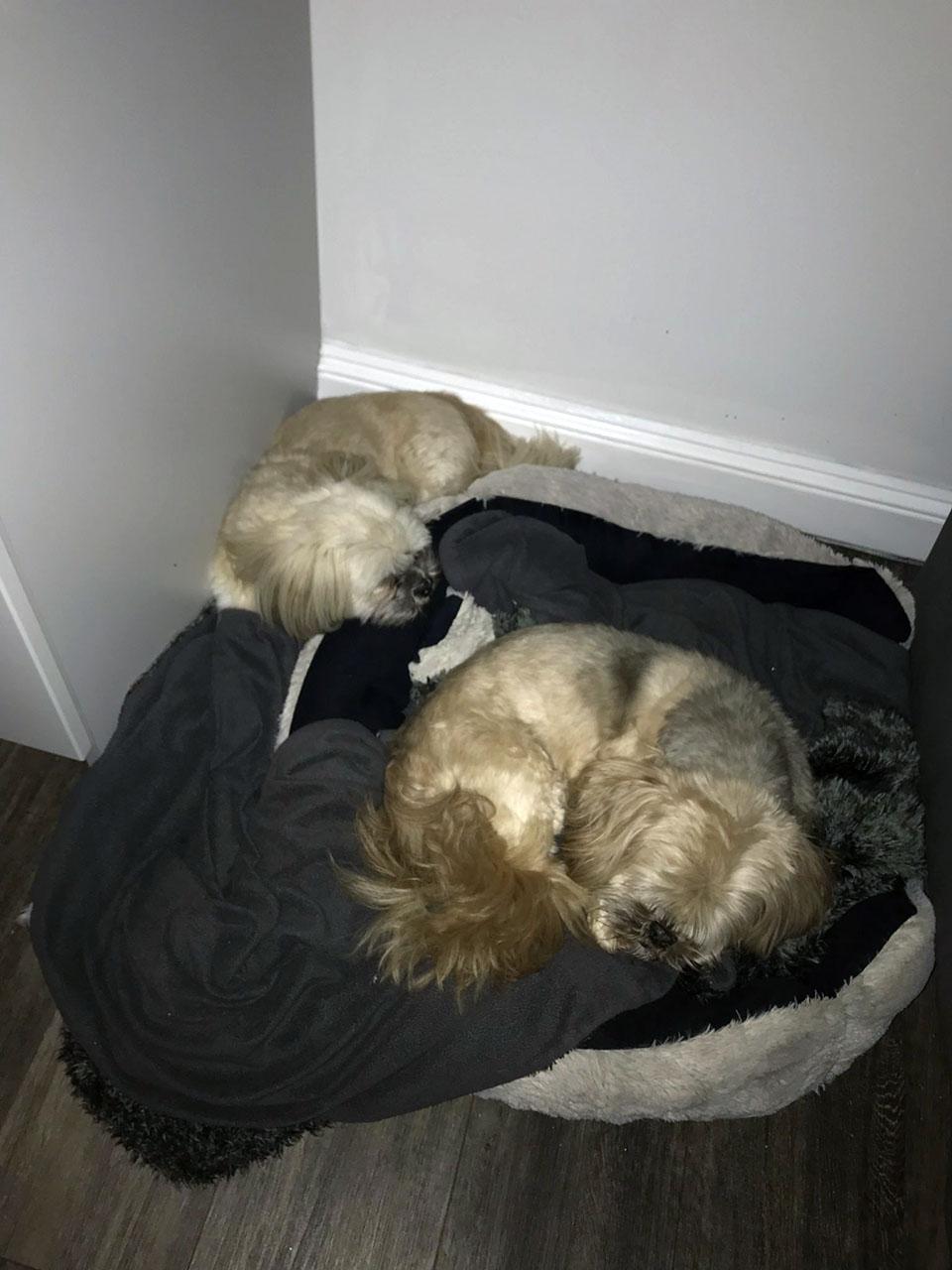 George y Harry durmiendo