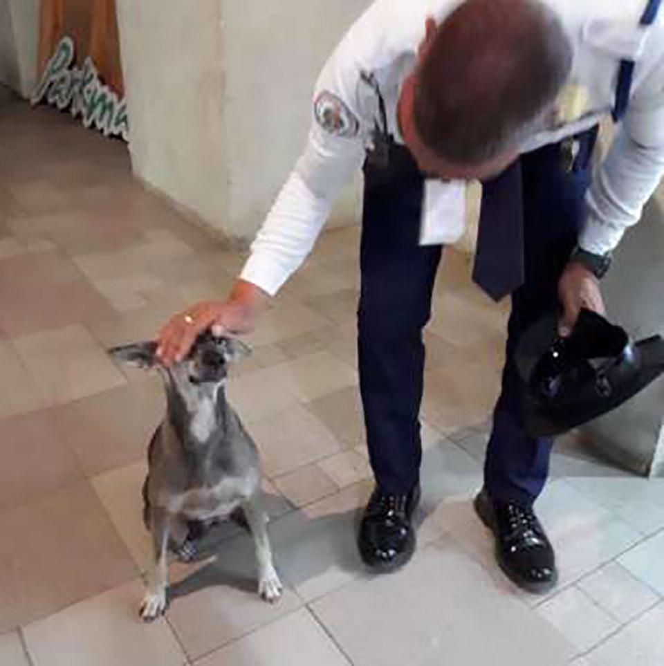 Guardia de seguridad acaricia a perrita de la calle