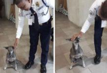 Guardia de seguridad del centro comercial ayuda a una perra abandonada