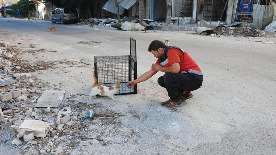 Hombre brinda alimento a gatito para rescatarlo