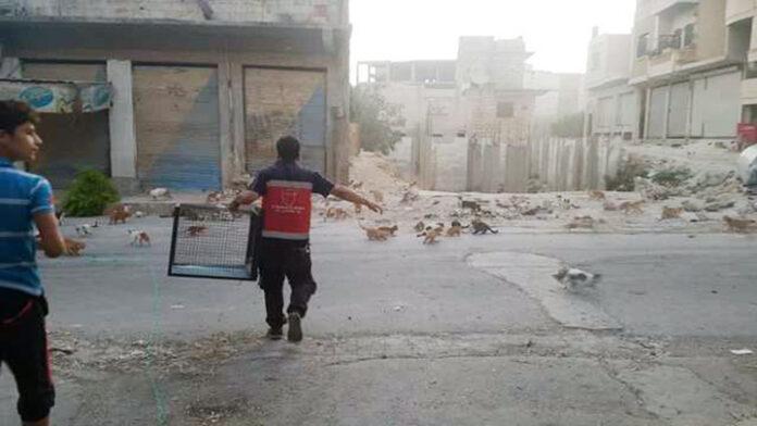 Hombre rescata gatos en zona de guerra