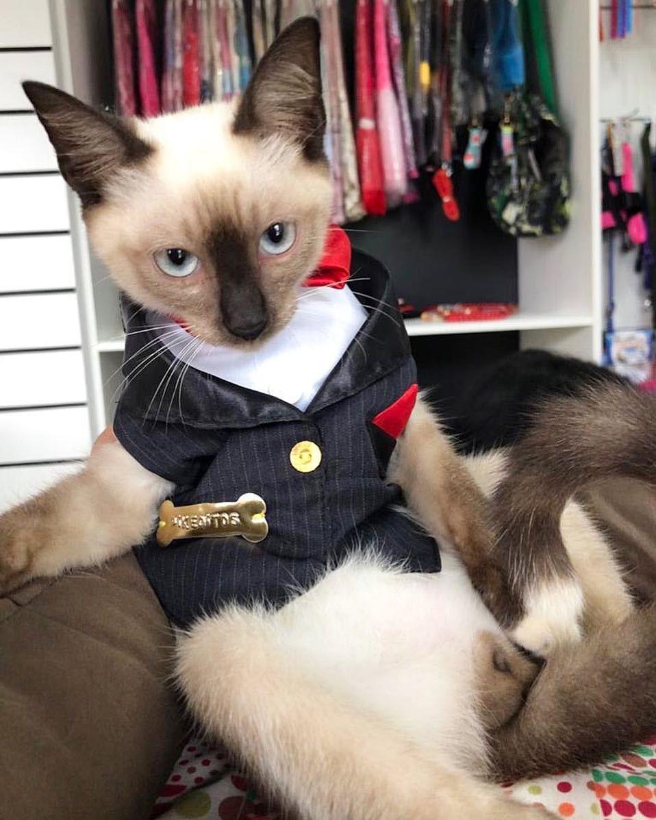 Leon con traje