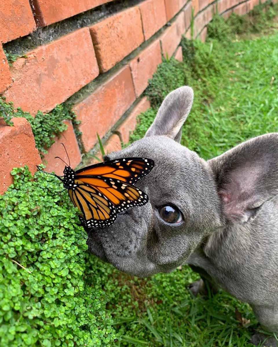 Mariposa en la nariz de perrito