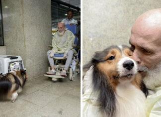 Médicos se sorprenden con la mejoría del paciente después de la visita de su perro