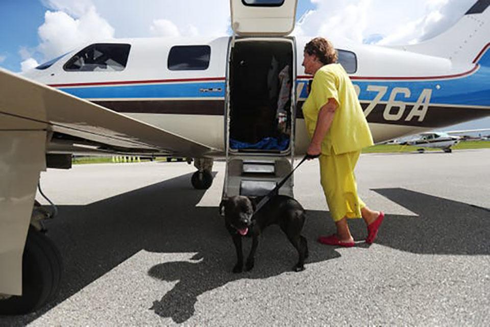 Mujer lleva a perro al avión