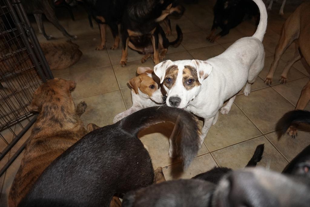 Mujer refugia a 97 perros en su casa