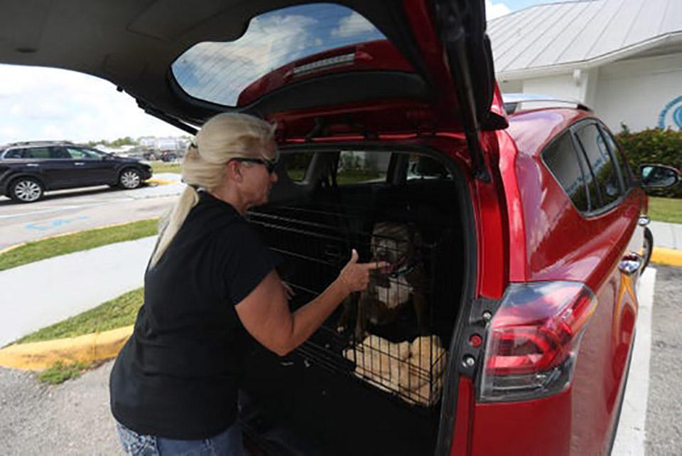 Mujer sube perro a vehículo