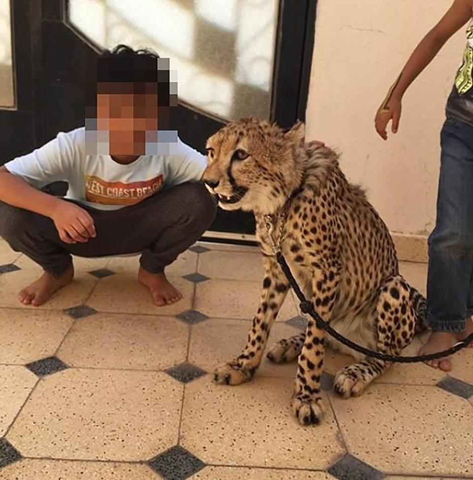 Niño con guepardo