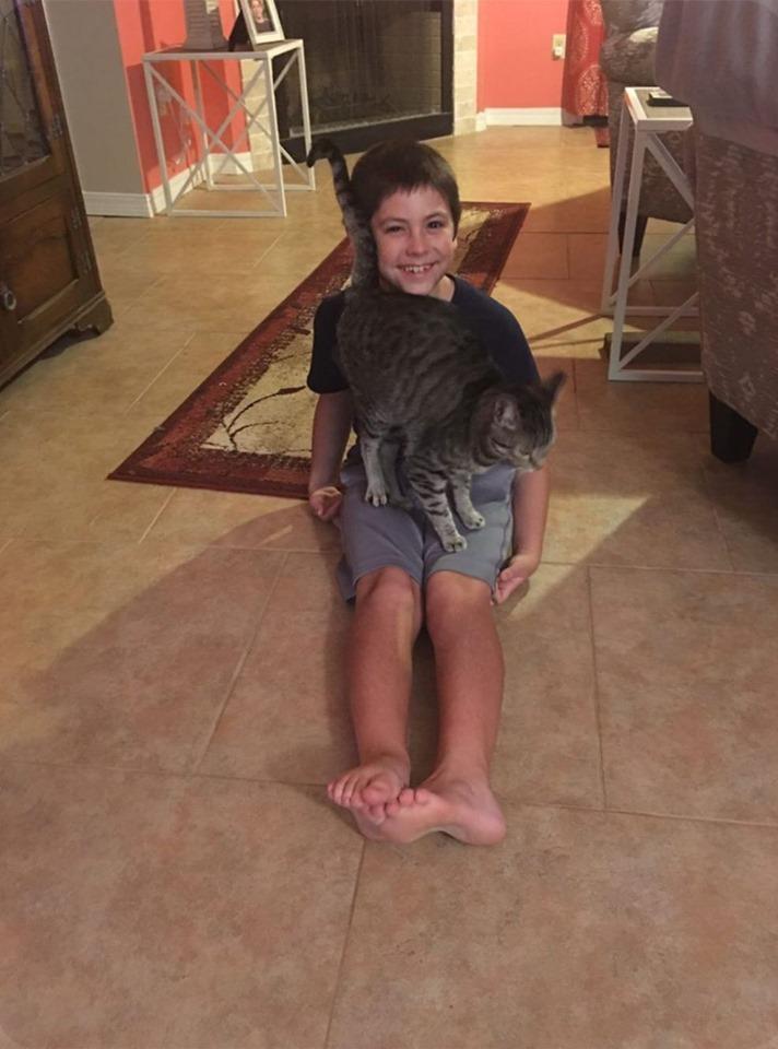 Niño y gato de acogida