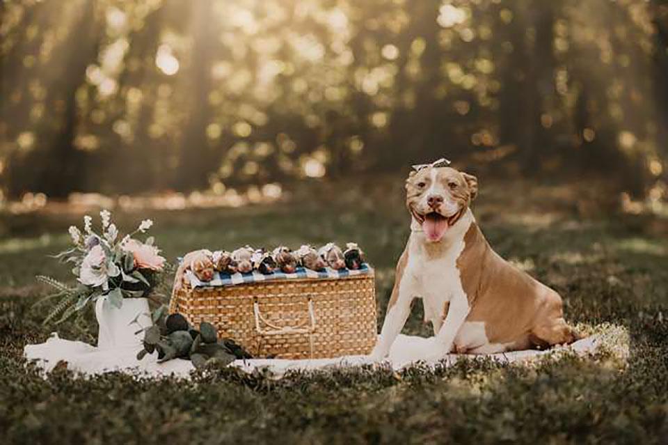 Perrita posa con sus cachorros