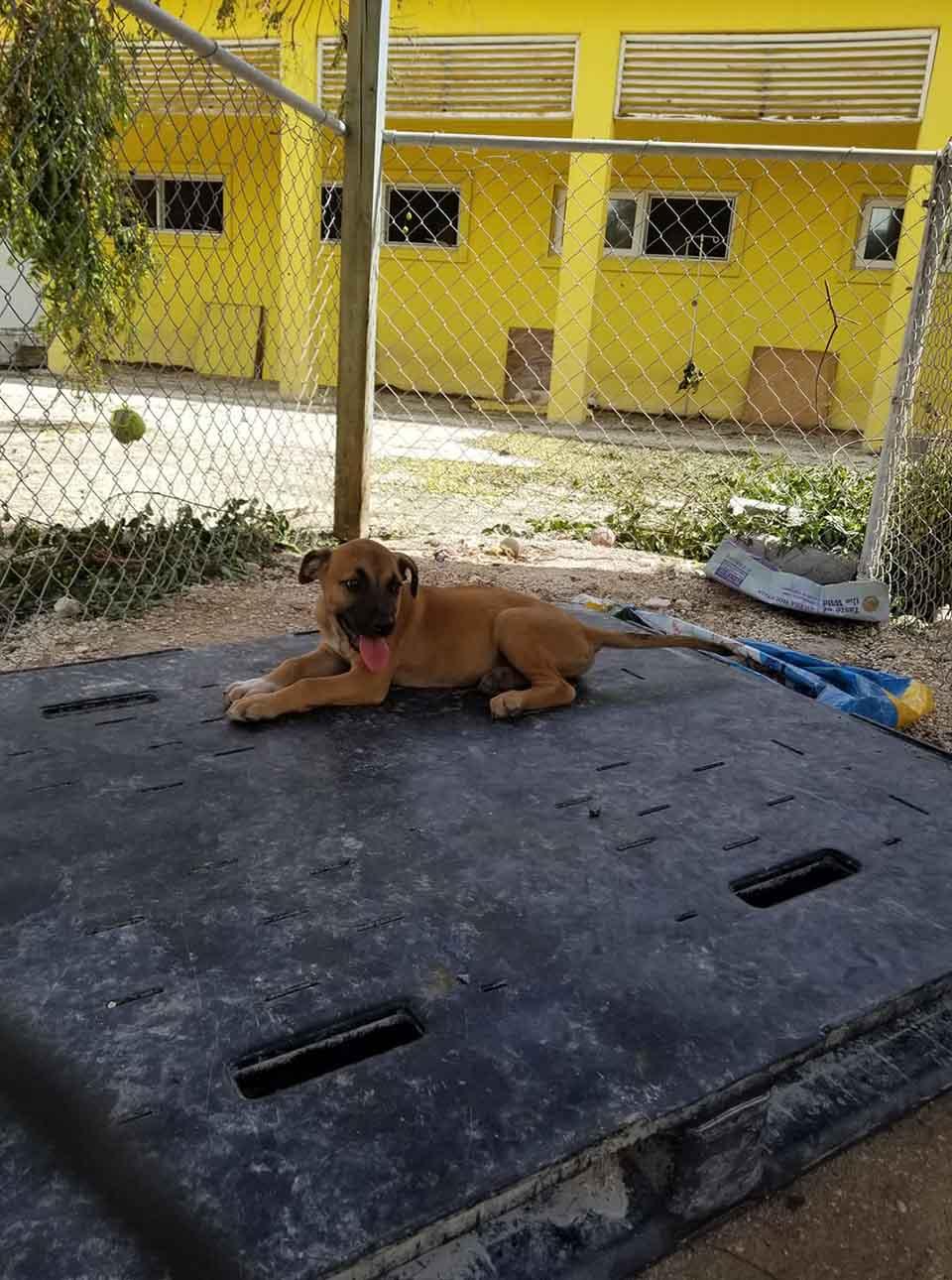 Perrito en el piso del refugio