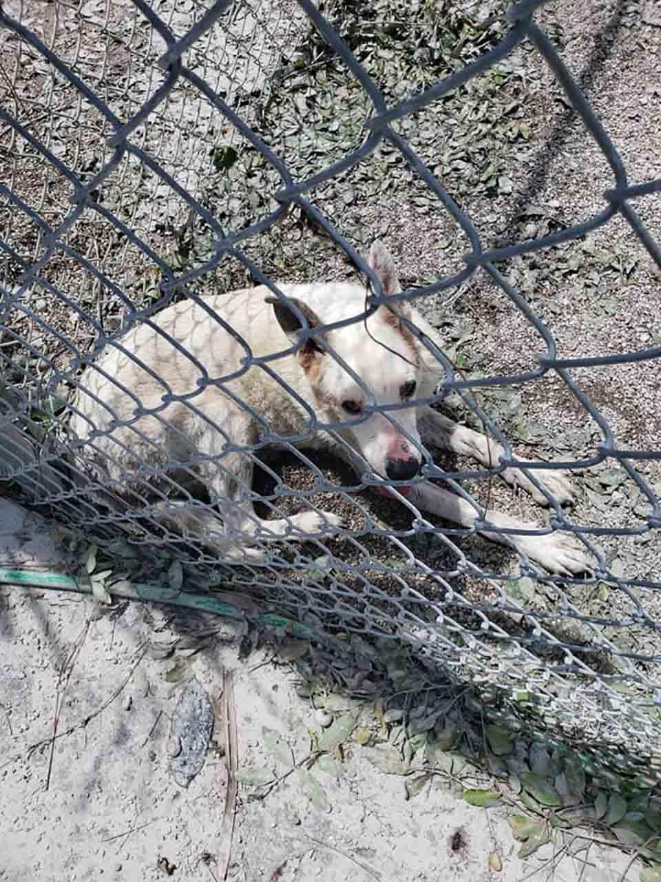 Perrito en refugio