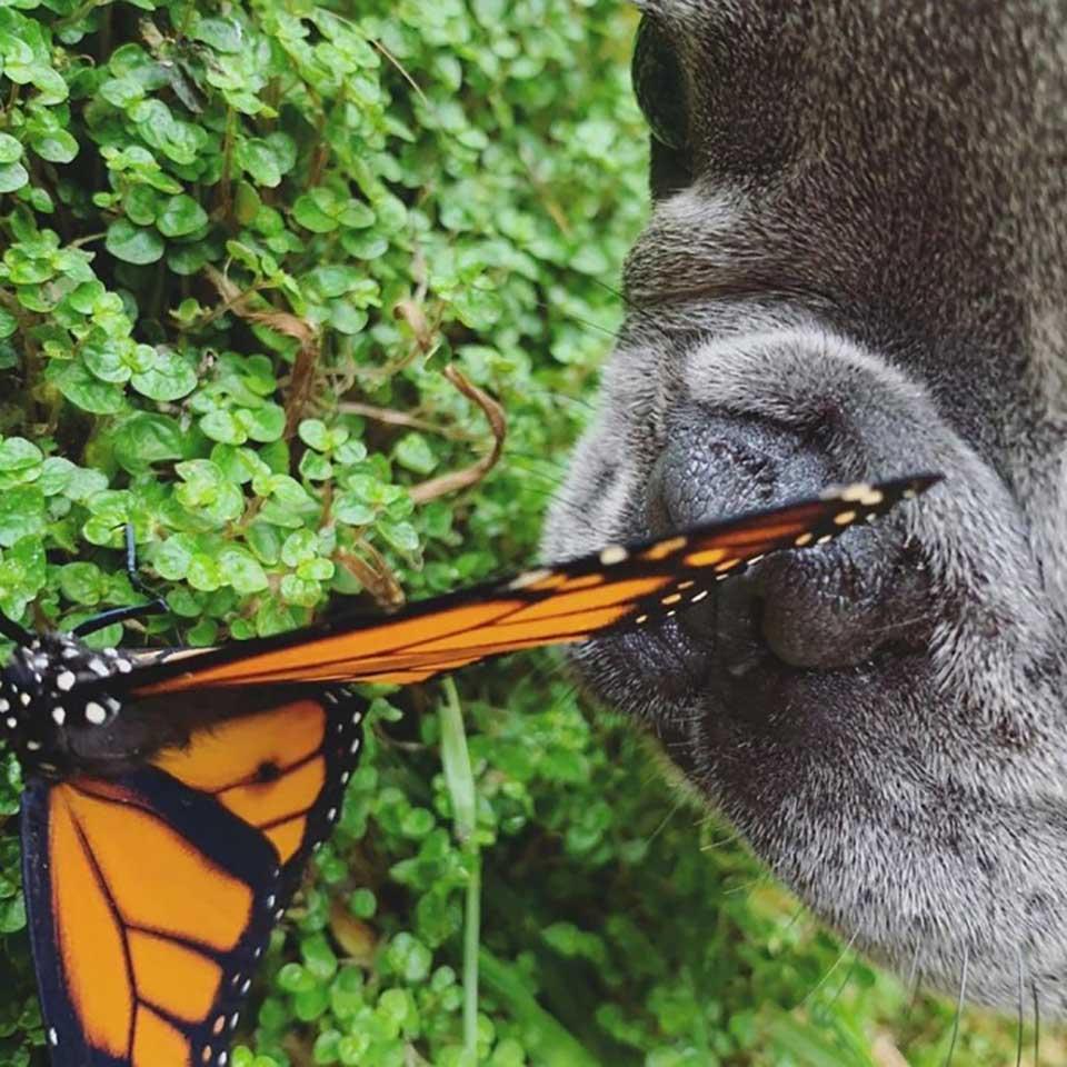 Perrito y mariposa