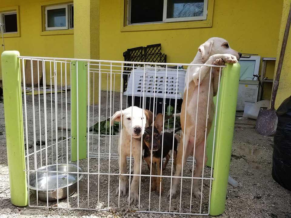 Perritos en refugio