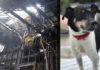 Perro alerta a su familia sobre el incendio pero no sobrevive