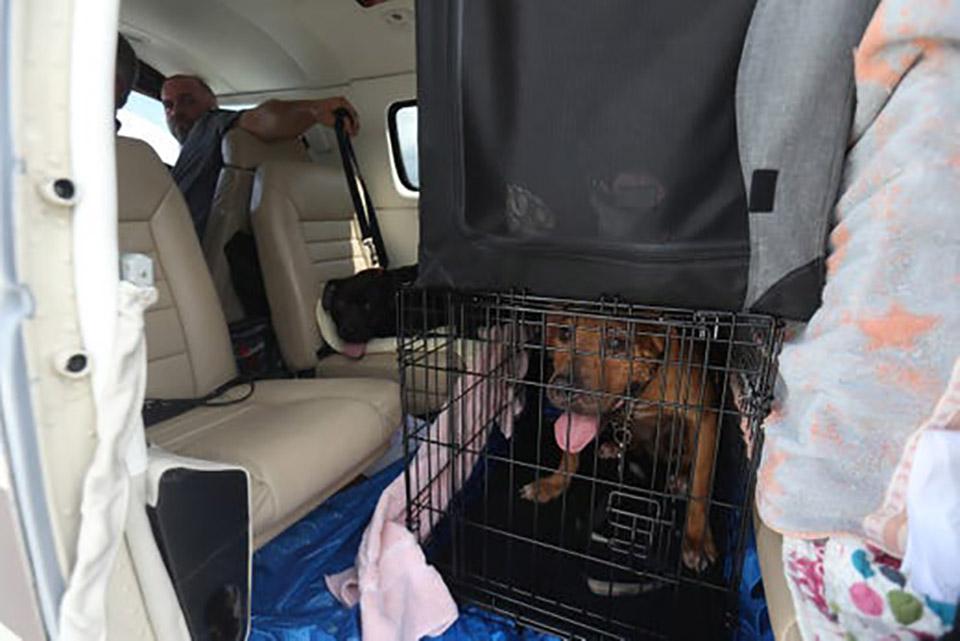 Perro dentro del avión