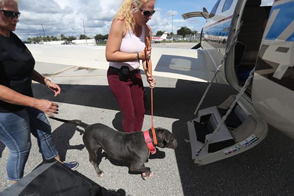 Perro se prepara para subir al avión