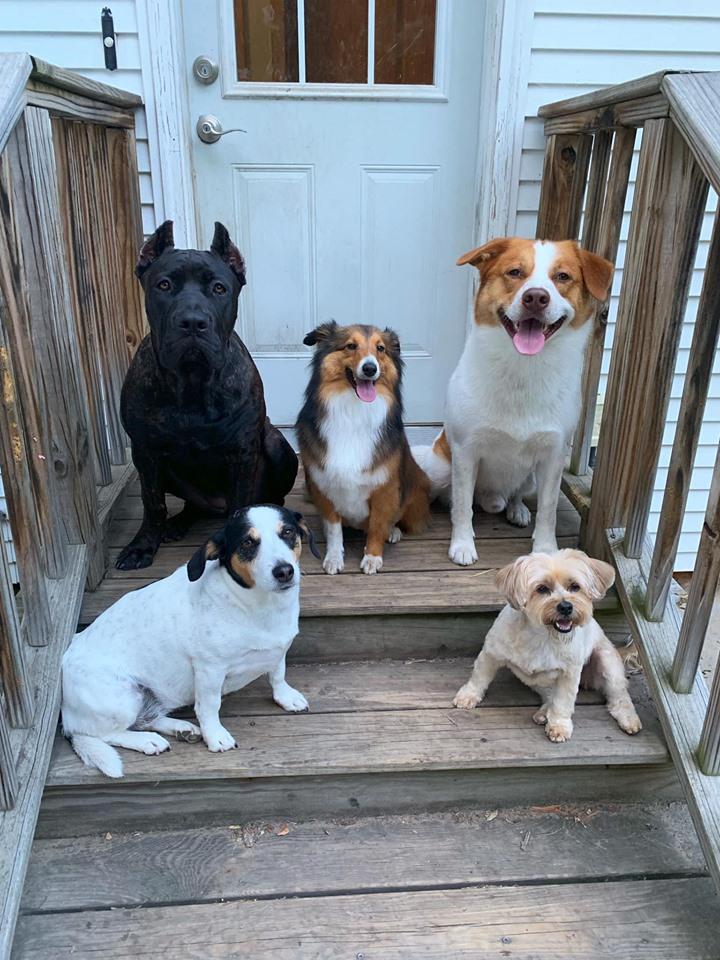 Perros de Abby