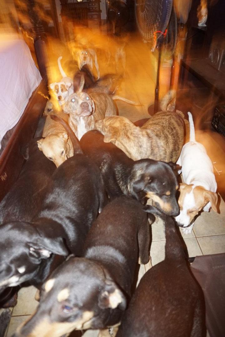 Perros e la habitación