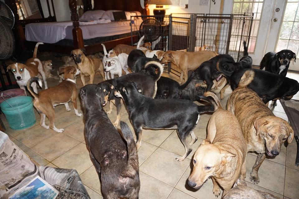 Perros en casa de Chella